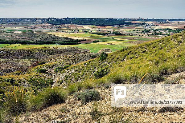 Country in La Guardia. Toledo. Castilla la Mancha. Spain. Europe.
