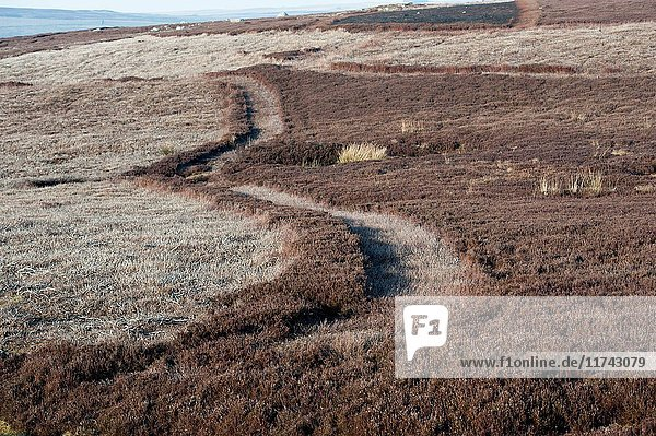 Firebreak strips at the edge of a heather burning plot on moorland  Yorkshire  UK. (Photo by: Wayne Hutchinson/Farm Images/UIG)
