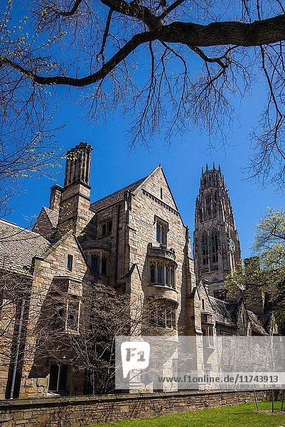 USA  Connecticut  New Haven  Yale University  university campus.