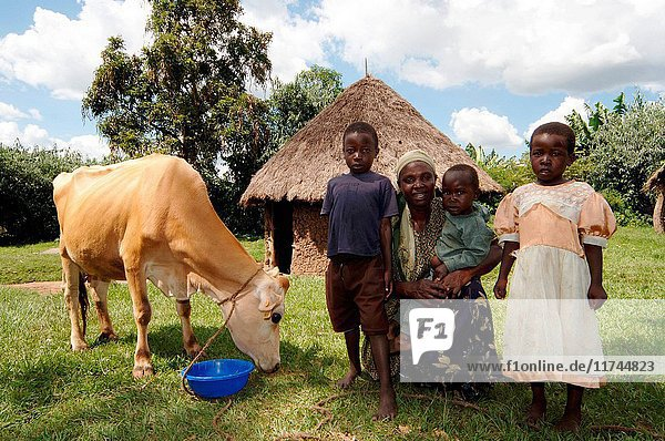 African Mother with young children and cow feeding from plastic bucket Kenya Africa. (Photo by: Wayne Hutchinson/Farm Images/UIG)