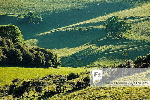 Spring evening in South Downs National Park near Brighton  East Sussex  England.