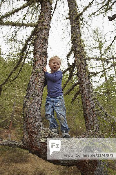Bildnis eines auf einem Baum stehenden Jungen
