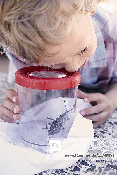 Junge betrachtet Wanze durch vergrößerten Behälter