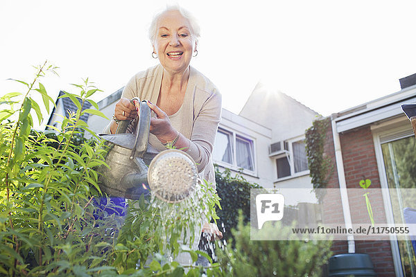 Senior woman in garden  watering plants
