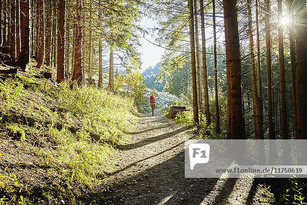 Wandern im Wald  Tegelberg  Füssen  Allgäu  Deutschland