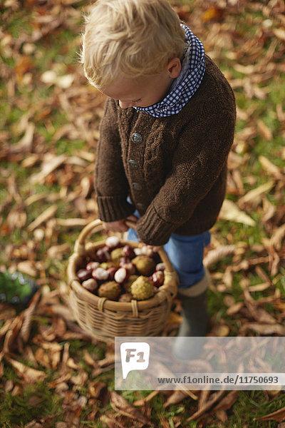 Junge hält Korb mit Kastanien