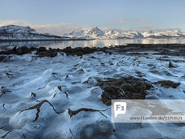 Landscape with seaweed near Leknes  island Vestvagoy. The Lofoten islands in northern Norway during winter. Europe  Scandinavia  Norway  February.