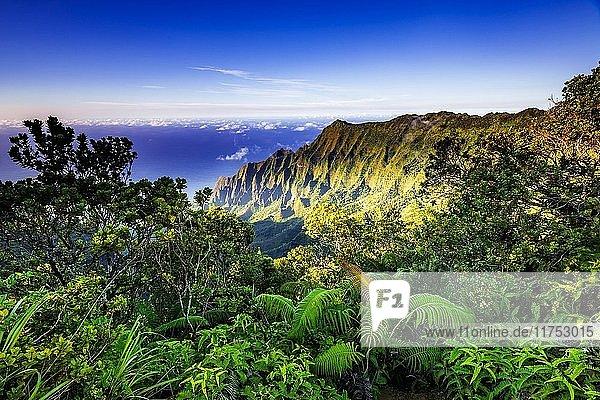 Kalalau Valley and the Na Pali Coast from the Pihea Trail  Kokee State Park  Kauai  Hawaii USA.