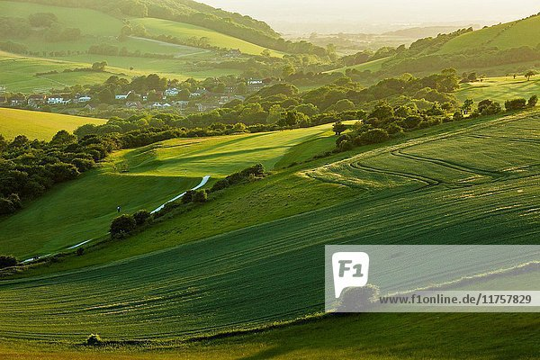 Spring afternoon in South Downs National Park  East Sussex  England.
