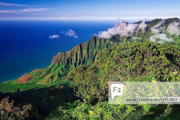 Kalalau Valley and the Na Pali Coast from Kalalau Lookout  Kokee State Park  Kauai  Hawaii USA.