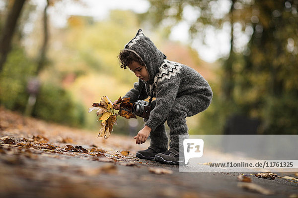 Young girl outdoors  wearing knitted suit  collecting autumn leaves