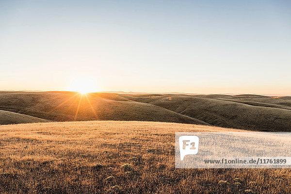 Sonnenuntergangslandschaft mit Blick auf sanfte Präriehügel  Bakersfield  Kalifornien  USA