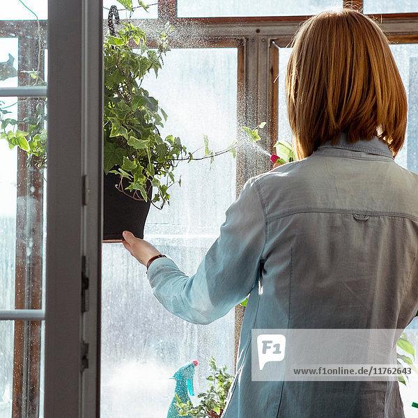 Frau sprüht Wasser auf Topfpflanze  Rückansicht