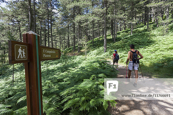 Hikers proceed on the path in the green woods of Col de Bavella (Pass of Bavella)  Solenzara  Southern Corsica  France  Europe
