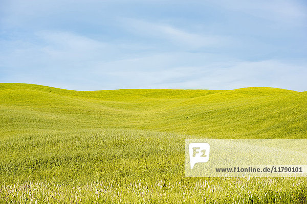 Italien  Toskana  Val d'Orcia  Feldlandschaft