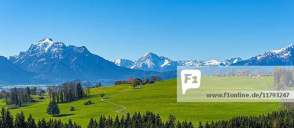 Deutschland  Bayern  Alpenvorland bei Rosshaupten mit Schloss Neuschwanstein und Saeuling im Hintergrund