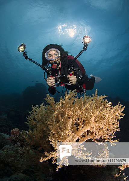 Palau  Frau beim Tauchen
