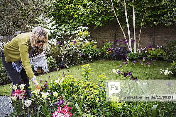 Woman standing in a garden  looking at flowers in a flowerbed.