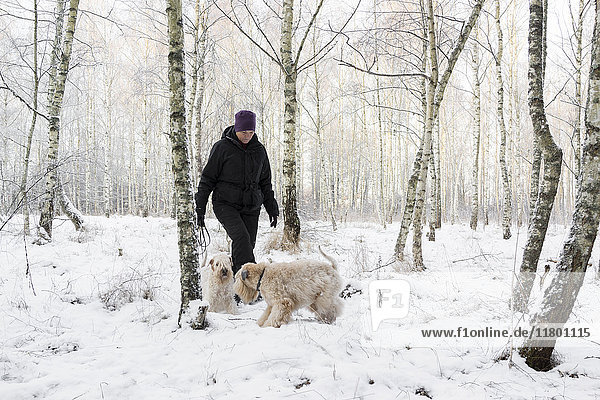 Woman walking with dogs Woman walking with dogs