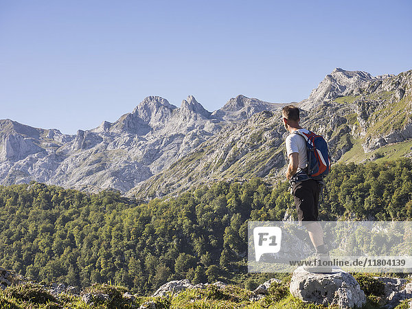 Man on hiking tour in Picos de Europa near Covadonga  Asturias  Northern Spain