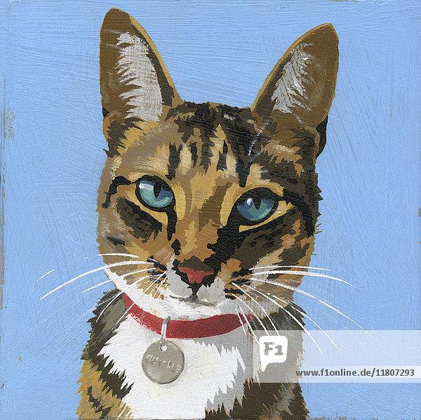 Portrait einer Katze mit Halsband und Namensschild