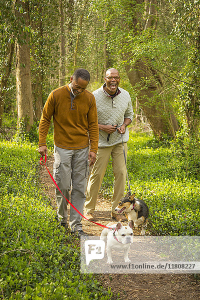 African American men walking dogs on path in forest