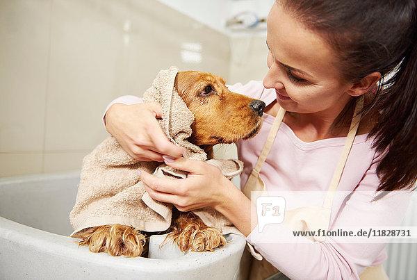 Friseurin und Cockerspaniel  die sich im Hundepflegesalon gegenseitig anstarren
