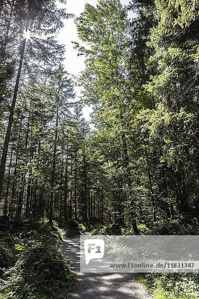 Schotterstraße im Wald
