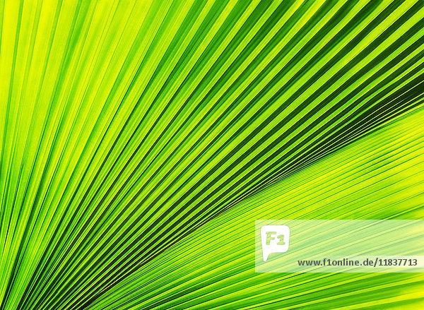 Close-up of palm leaf Close-up of palm leaf