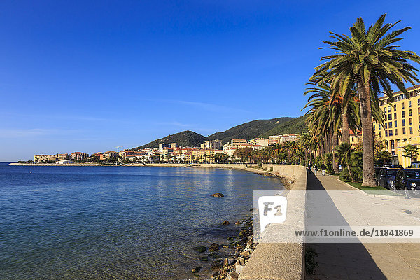 Saint Francois beach promenade with palm trees  morning light  Ajaccio  Island of Corsica  Mediterranean  France  Mediterranean  Europe