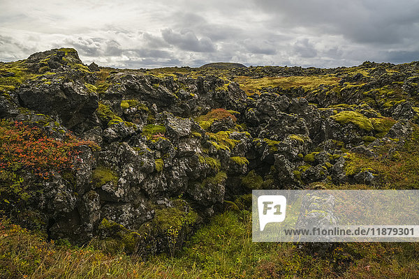 'Ancient lava covered in moss; Iceland'