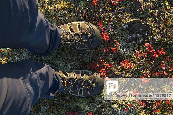 'Feet standing in the colourful tundra along Iceland's South Coast; Iceland'