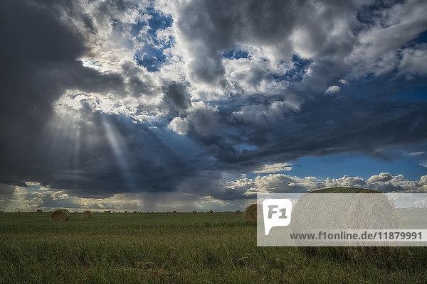 'Sunlight breaks through the storm clouds over a field of hay bales; Saskatchewan  Canada'