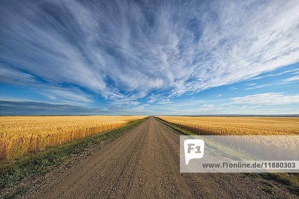 'A gravel road that heads through Canada's prairies in rural Saskatchewan; Val Marie  Saskatchewan  Canada'