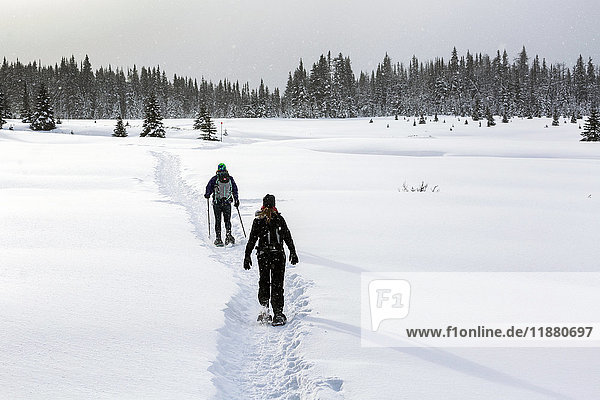 'Two female snowshoers on a snow covered trail in an open meadow with snow covered evergreen trees; Kananaskis Country  Alberta  Canada'
