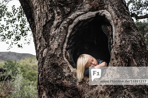 Young boy  in hollow of tree  sleeping
