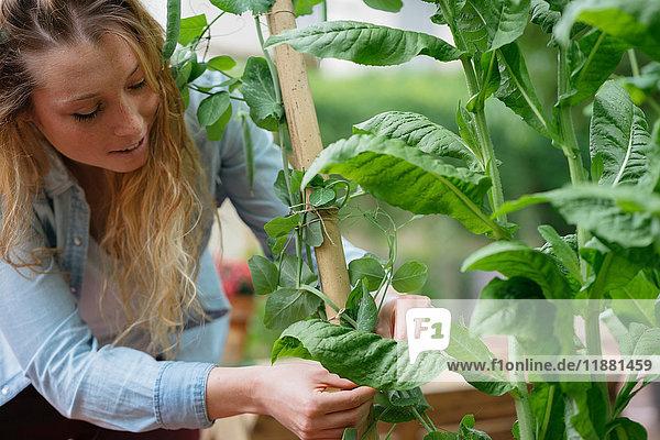 Junge Frau inspiziert Pflanze im Garten