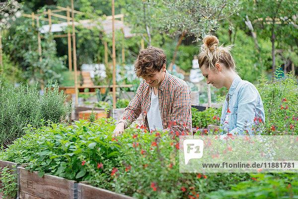 Junger Mann und Frau pflegen Pflanzen  die in einem hölzernen Trog wachsen