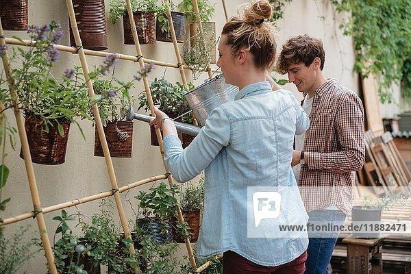 Junger Mann und Frau kümmern sich um Pflanzen  die in Dosen wachsen  junge Frau gießt Pflanzen mit der Gießkanne