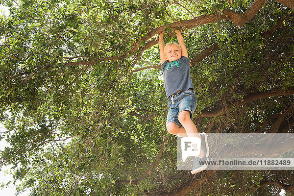Boy hanging from tree branch looking at camera smiling