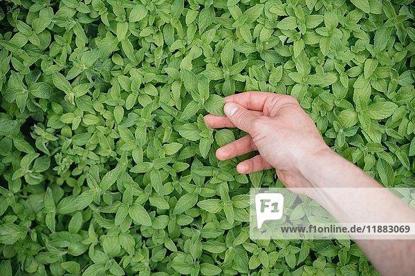 Junge Frau inspiziert wachsende Pflanze  Nahaufnahme