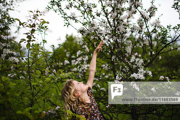 Girl with wavy blond hair reaching up to tree blossom