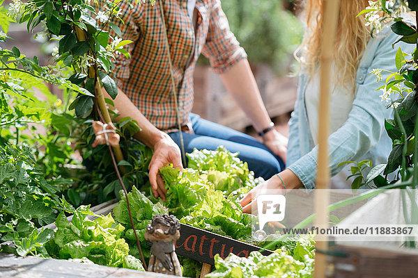 Junger Mann und Frau pflücken Salat aus einem hölzernen Trog