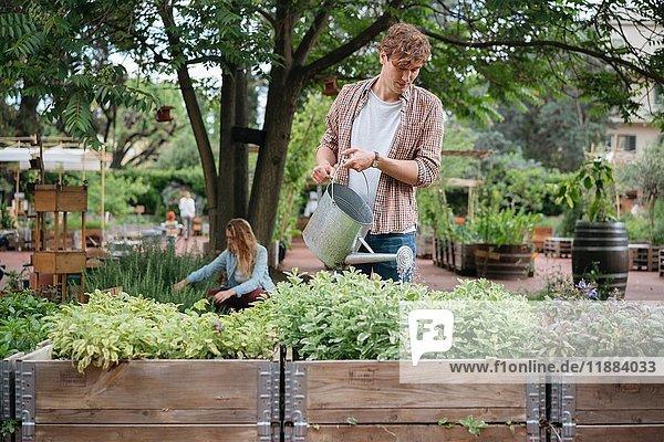 Junger Mann und Frau im Stadtgarten  junger Mann gießt Pflanzen im Trog mit der Gießkanne