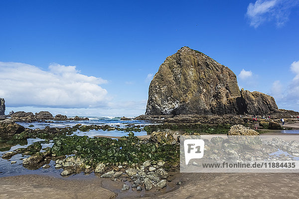 'Tourists walking among the tide pools and seaweed covered rocks at low tide along the Oregon coast; Bandon  Oregon  United States of America'
