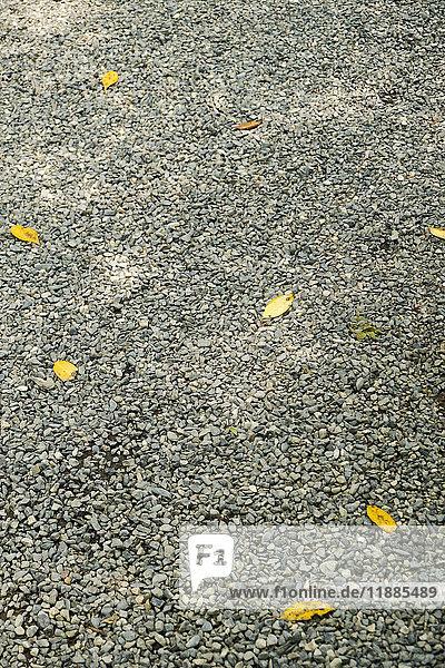 Hochwinkelansicht von Kieselsteinen mit gefallenen  trockenen  gelben Blättern