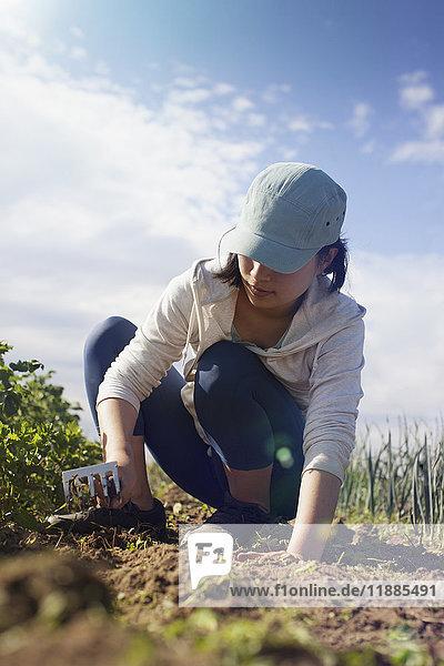 Engagierte Frau beim Harken auf dem Feld auf dem Bauernhof bei Sonnenschein