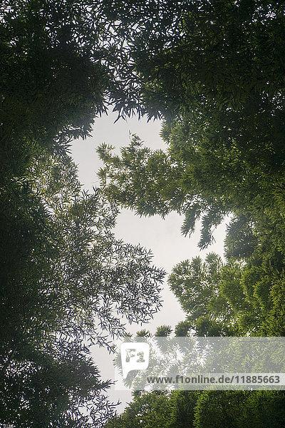 Direkt unter den grünen Bäumen  Kyoto  Japan