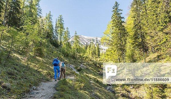 Wanderweg am Bachbett entlang zur Seekarspitze  Tirol  Österreich  Europa