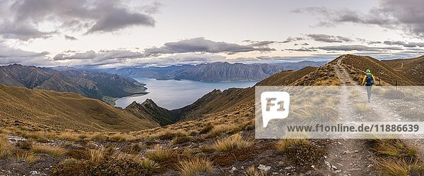 Wanderweg  Lake Hawea und Berge  Ausblick vom Isthmus Peak Track  Otago  Südinsel  Neuseeland  Ozeanien